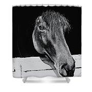 Noble Stallion  Shower Curtain