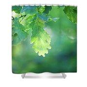 Oak Branch Shower Curtain