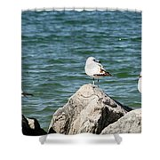 3 Of Them At Sea Shower Curtain