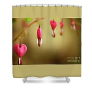 Old-fashioned Bleeding Heart Shower Curtain
