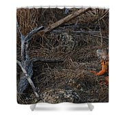 Orange Iguana Shower Curtain