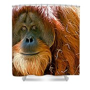 Orangutan  Shower Curtain