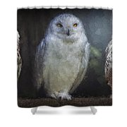 3 Owls On A Branch Shower Curtain