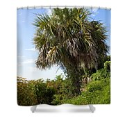 Pelican Island In Florida Shower Curtain