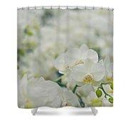 Phalaenopsis Shower Curtain