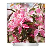 Pink Cherry Tree Shower Curtain
