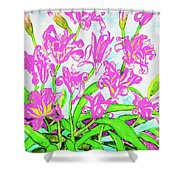 Pink Daily Lilies Shower Curtain