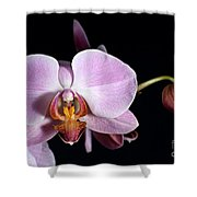 Pink Orchid V Shower Curtain