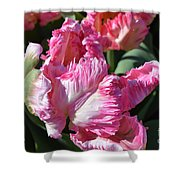 Pink Parrot Tulip Shower Curtain