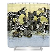 Quenching Their Thirst Shower Curtain