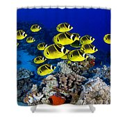 Racoon Butterflyfish Shower Curtain