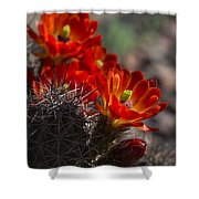 Red Hot Hedgehog  Shower Curtain