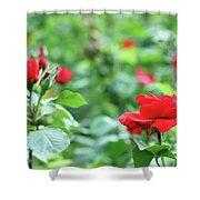 Red Roses Garden Spring Season Shower Curtain