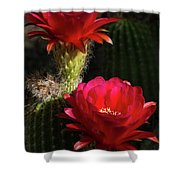 Red Torch Cactus  Shower Curtain