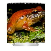 Rosy Ground Frog Shower Curtain