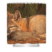 San Joaquin Kit Fox  Shower Curtain