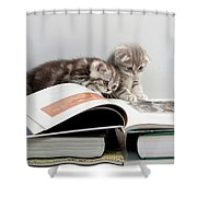 Scottish Fold Cats Shower Curtain by Evgeniy Lankin