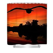 Seagull Flying In Action Shower Curtain by Fernando Cruz