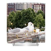 3 Seagulls In A Row Shower Curtain