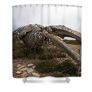 Seymour Marine Discovery Center Santa Cruz Shower Curtain