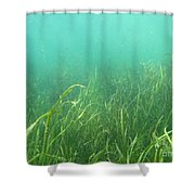 Shallow Freshwater Lake Shower Curtain