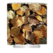 Silver Birch Leaves Lying On A Brick Path In A Cheshire Garden On An Autumn Day   England Shower Curtain