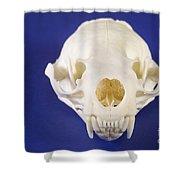 Skull Of A River Otter Shower Curtain