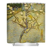 Small Pear Tree In Blossom Shower Curtain
