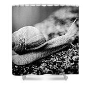 Snail Crawling On The Stone Artmif Shower Curtain by Raimond Klavins