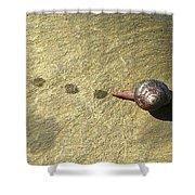 Snail Trail Shower Curtain