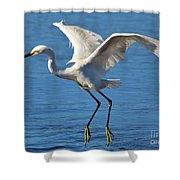 Snowy Egret In Flight Shower Curtain