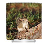 3- Squirrel Shower Curtain