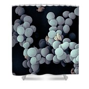 Staphylococcus Saccharolyticus Shower Curtain
