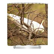 Sulfur Crested Cockatoo Shower Curtain