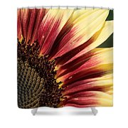 Sunflower Named Ruby Eclipse Shower Curtain