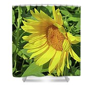 Sunny Delight Shower Curtain