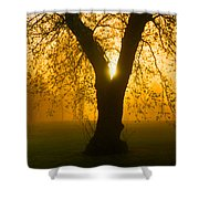 Sunrise Trees Fog Shower Curtain