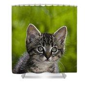 Tabby Kitten Shower Curtain