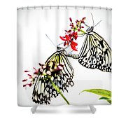 The Extraordinary Rice Paper Butterfly A Series Shower Curtain