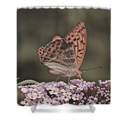 Tramonti Butterfly Shower Curtain