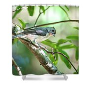 Tufted Titmouse In The Wilds Of South Carolina Shower Curtain