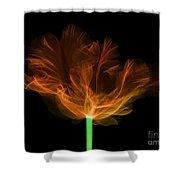 Tulips, X-ray Shower Curtain