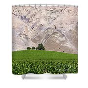 Vines In The Atacama Desert Chile Shower Curtain