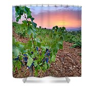 Vineyards Shower Curtain