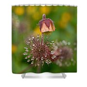 Water Avens Shower Curtain
