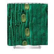Wheat Leaf Stomata, Sem Shower Curtain