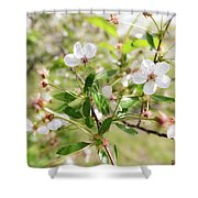 White Cherry Flower Shower Curtain