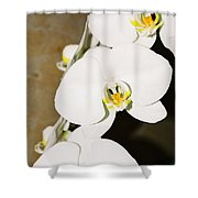 3 White Orchids Shower Curtain
