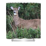 White Tailed Deer Calverton New York Shower Curtain
