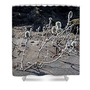 Woolly Willow Growing Wild In The Black Shower Curtain